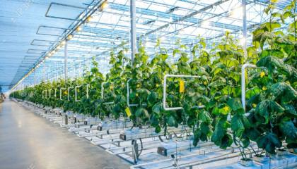 Modern Greenhouses